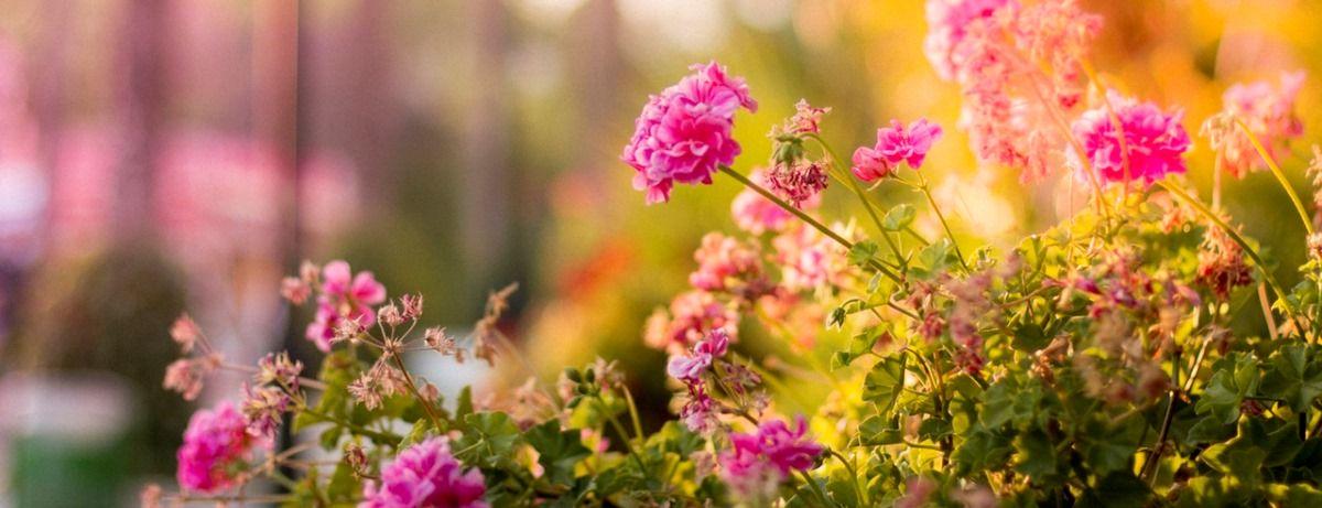 jardim de condomínio plantas