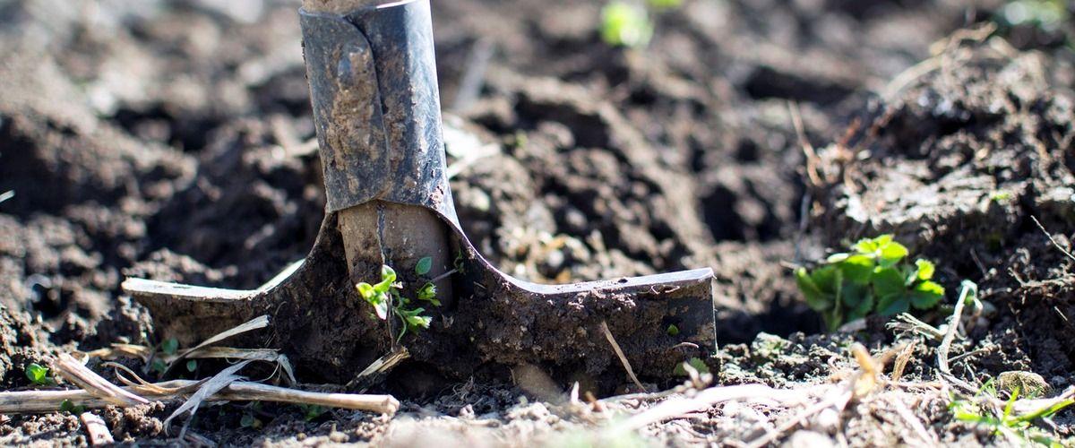 reformas no condomínio quando fazer outono melhor época jardinagem